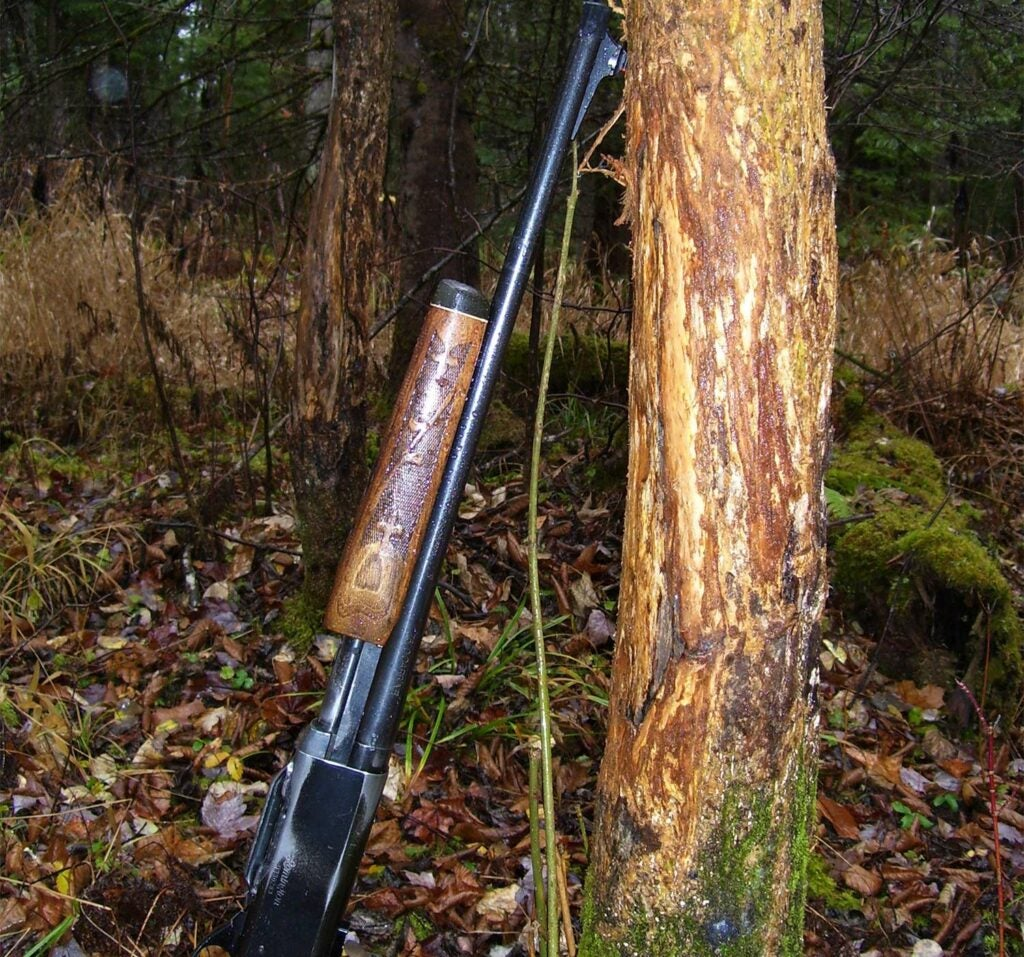 A rifle leans on the tree against a signpost rub on a tree.