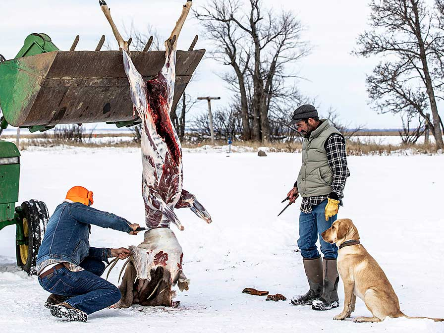 A man skins a deer as it hangs from a tractor scoop.