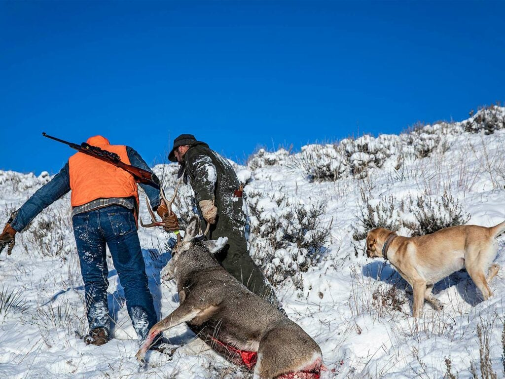 Two hunters drag a mule deer through the snow. Their hunting dogs follow.