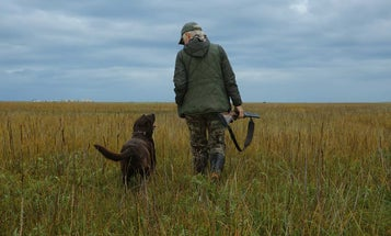 Why I Pick the Most Energetic Puppy in a Litter of Bird Dogs