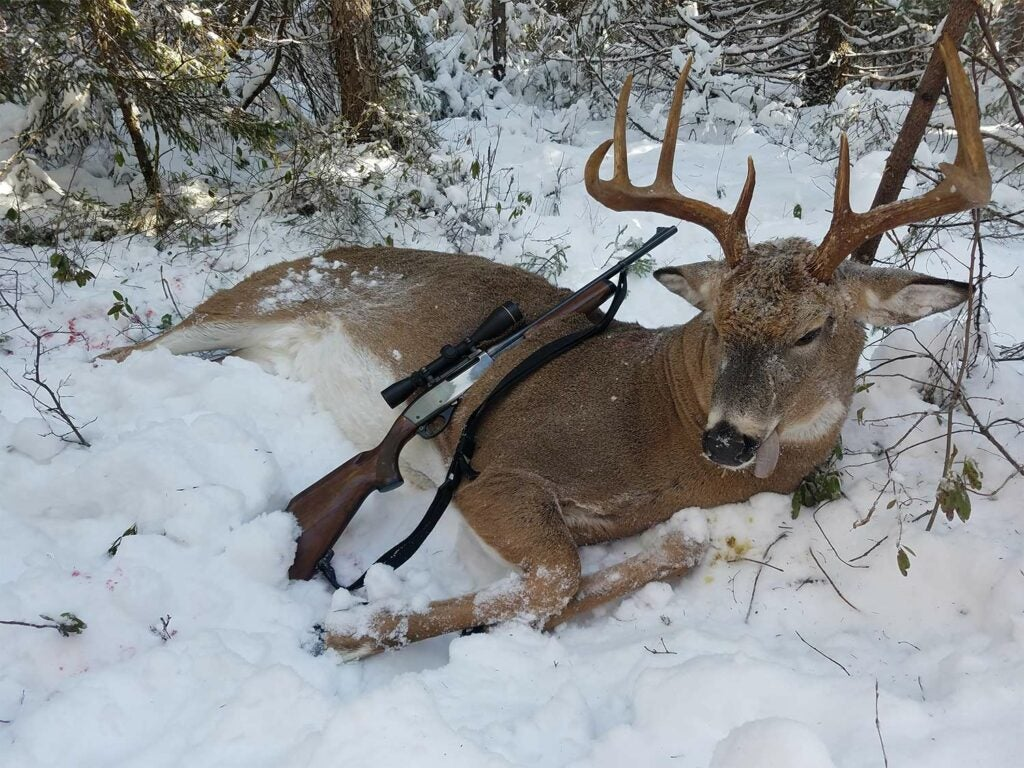 A whitetail buck lays dead in the snow while a rifle is propped against it.