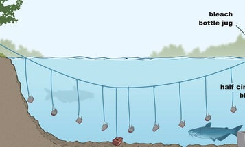 3 Ways to Catch Big Catfish Without a Rod and Reel
