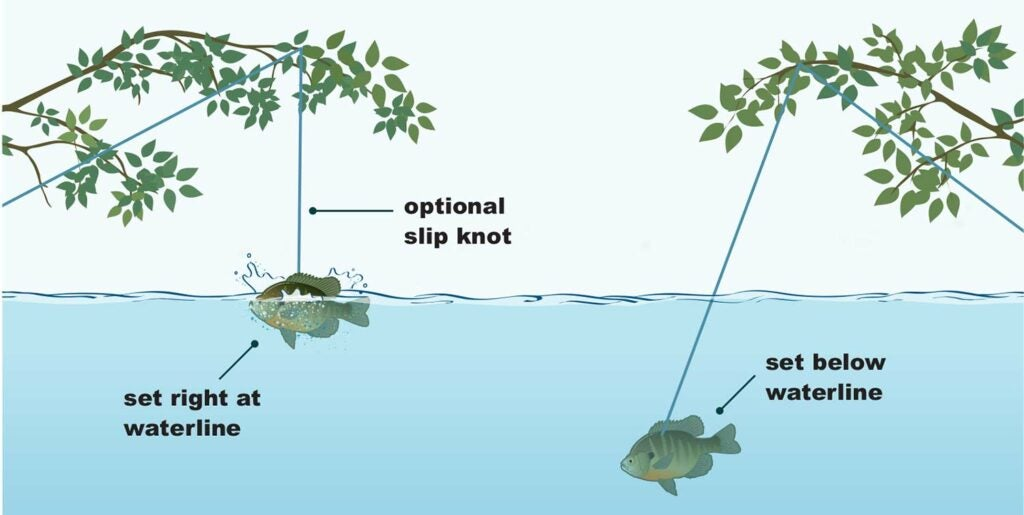 Illustration of limb line fishing rigs.