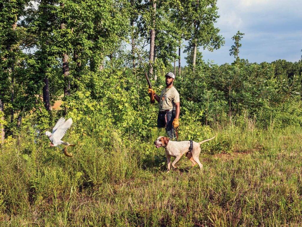 A hunter and dog walk through an open field, flushing birds out of the tall grass.