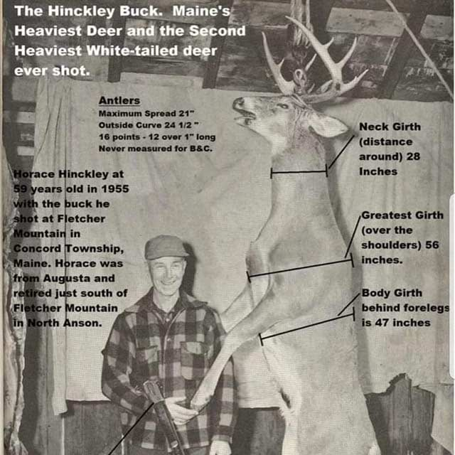 A black and white image of a man standing next to a large deer.