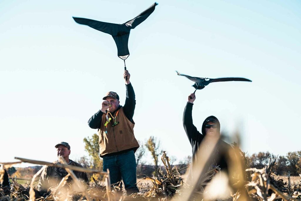 Flagging in geese in western Wisconsin.