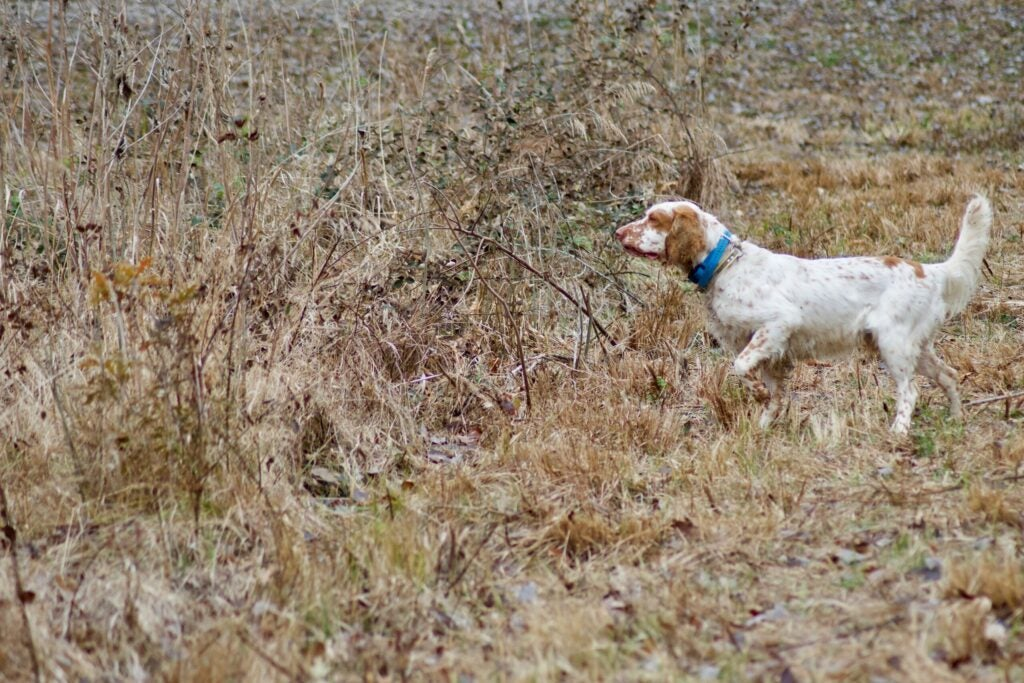 E-collars do not train obedience, they reinforce it.