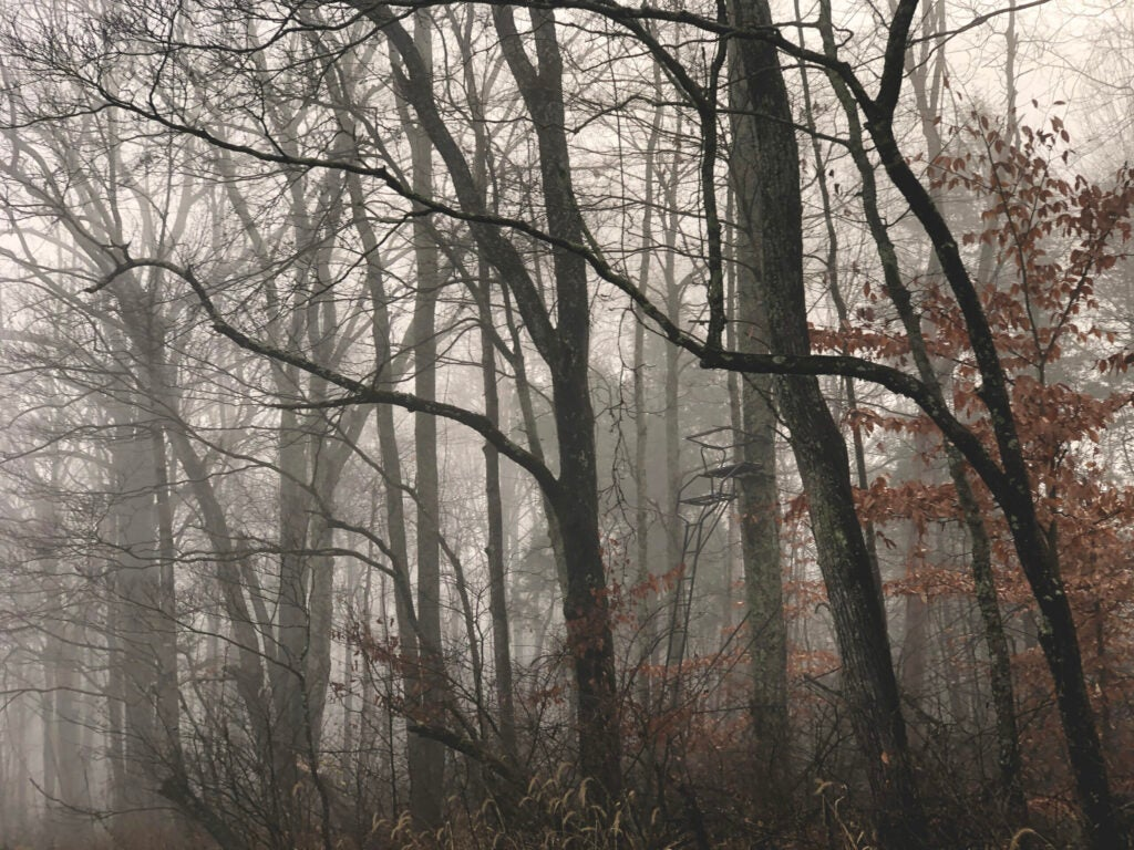 A double-seater ladder treestand tucked into a misty wooded field edge.