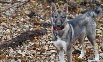 Buy a Hunting Dog that Suits You (and No One Else)