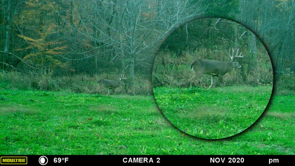 A trail camera photo of a whitetail buck with an inset circular image of the buck at a larger size.