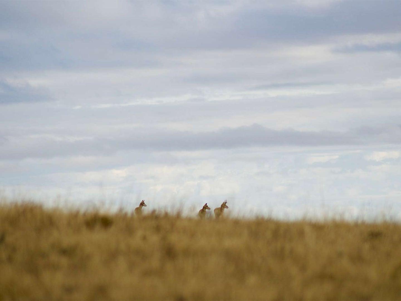 A group of hunters walking through an open field of tall grass.
