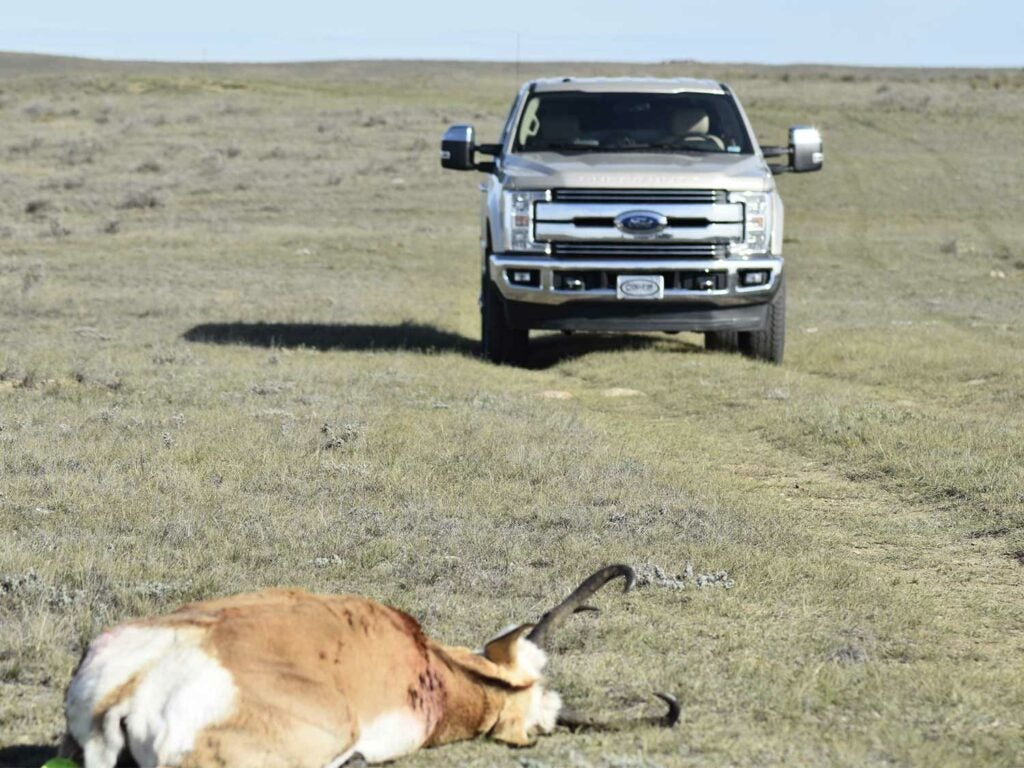 A truck drives up on a dropped antelope on the ground.