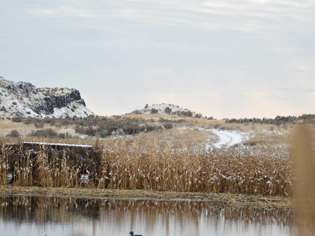 A duck hunting blind in tall grass next to a body of water.
