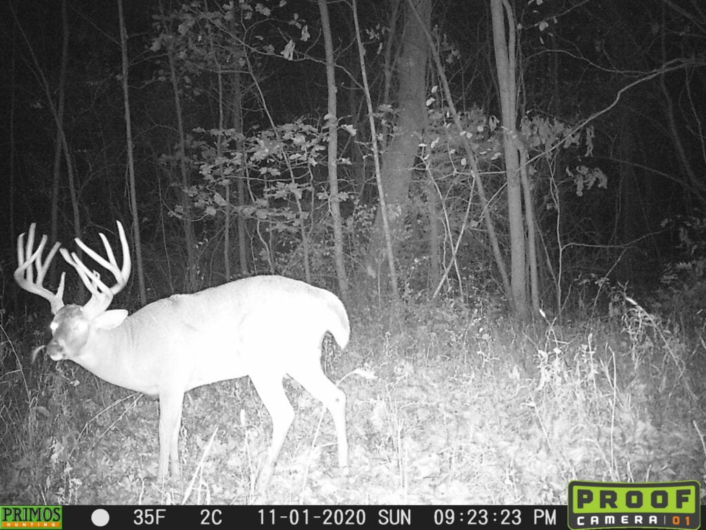 A big double-main-beam-buck on trail camera.