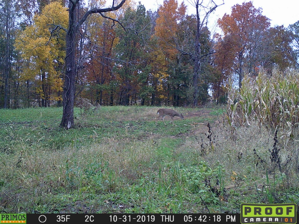A small whitetail deer on a trail camera with changing leaves in the background.