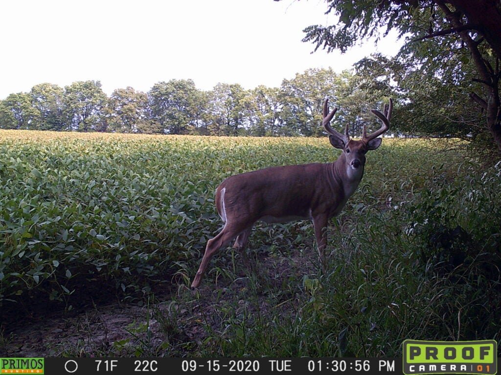 A big whitetail buck turned broadside, captured on trail camera.