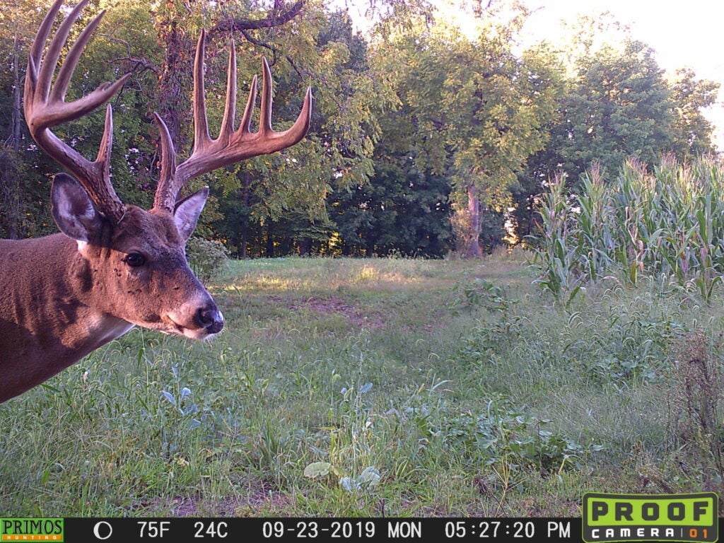 A big buck on trail camera.
