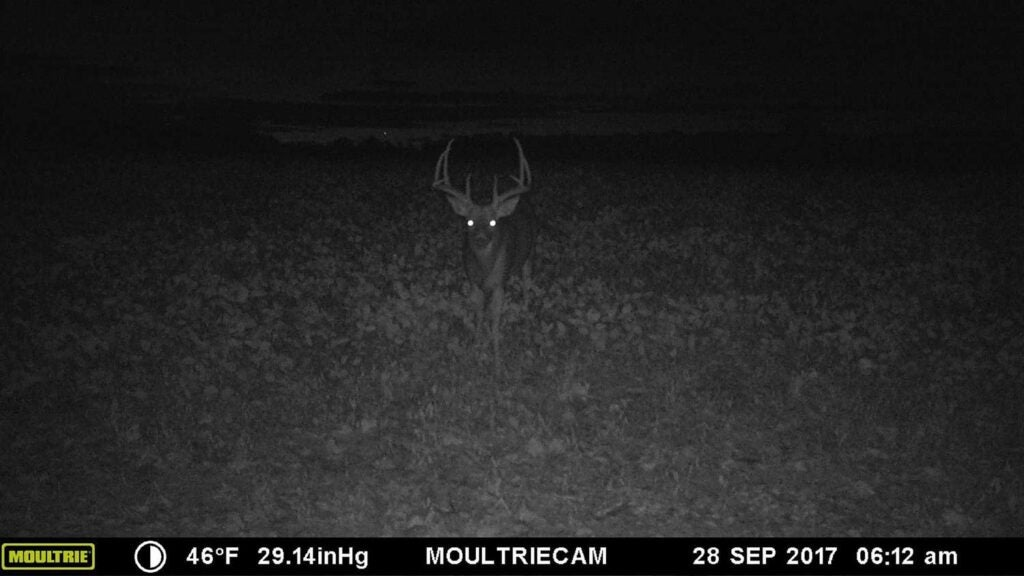 A trail cam photo of a deer at night.