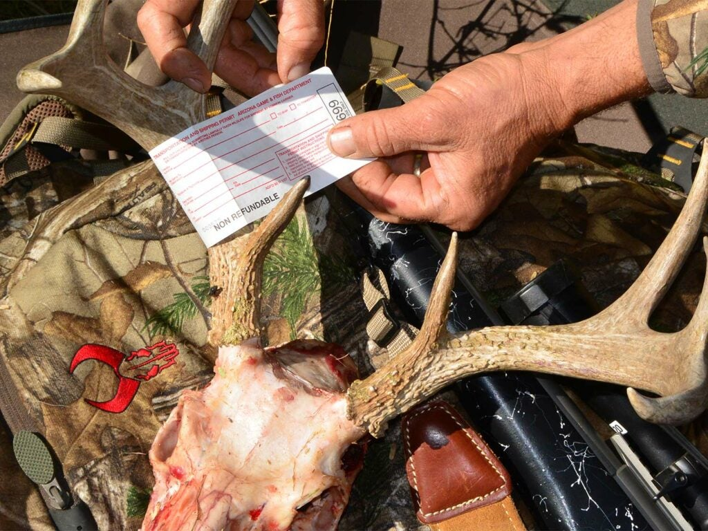 A hunter slips a tag on to deer antlers.