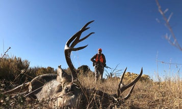 7 Rules You Must Follow to Punch Your Big-Game Tag on Public Land