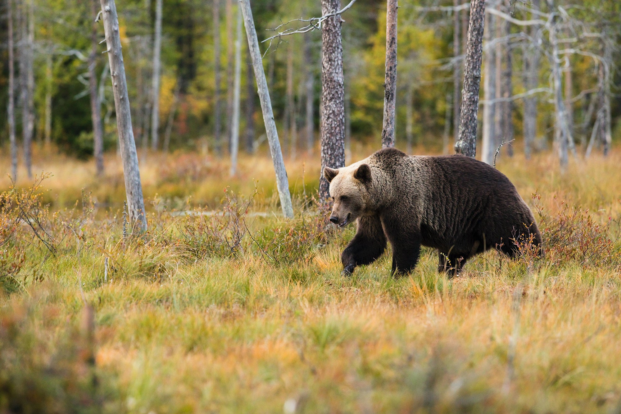 A bear encounter in the woods won't be so scary when you have the best bear spray.