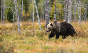 Best Bear Spray: Five Things to Consider