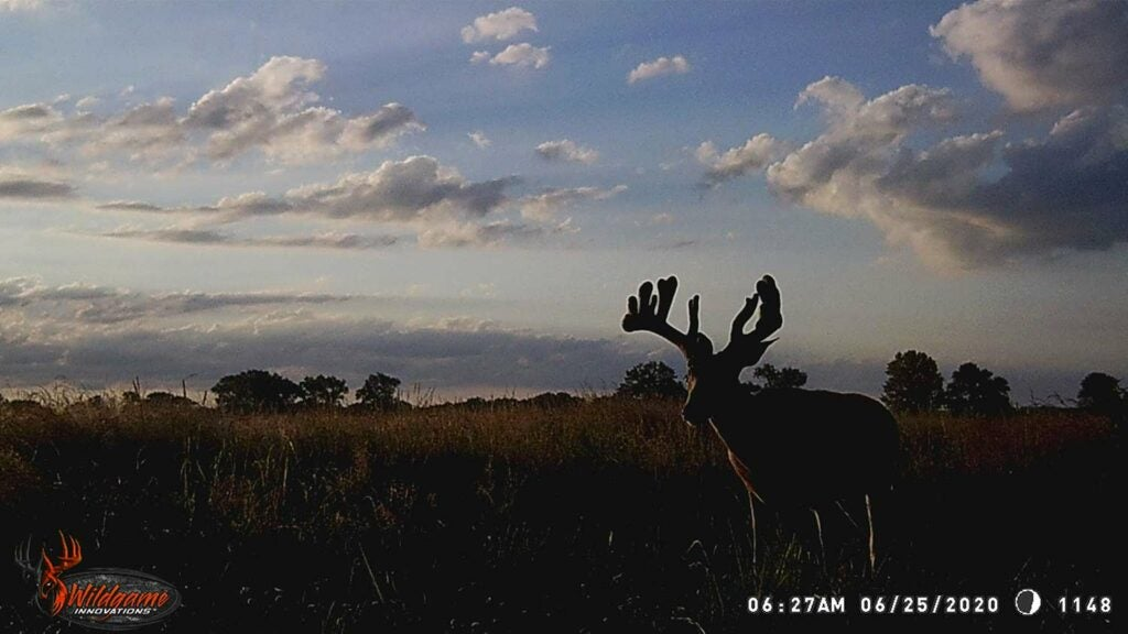A trail camera photo of a buck in a large open field.