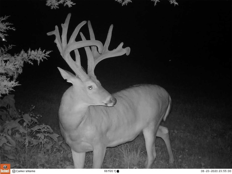 A trail camera photo of a buck at night.