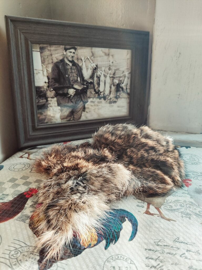 A rabbit hide on a table, in front of an old black and white photograph.