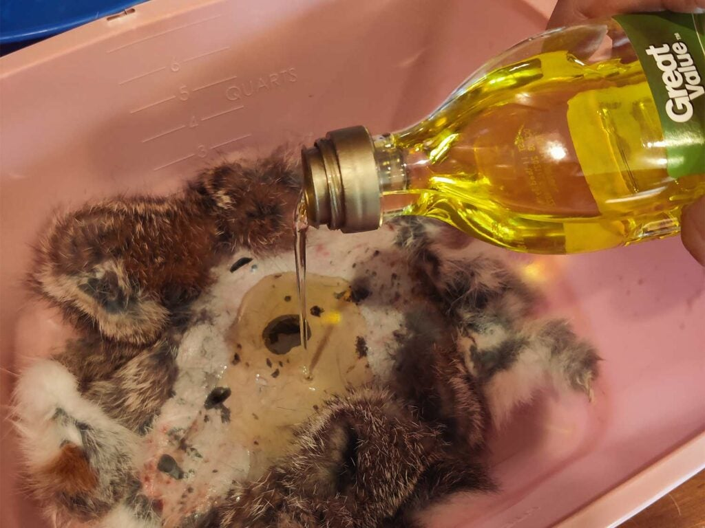Oil being poured into a bin of water and rabbit hides.