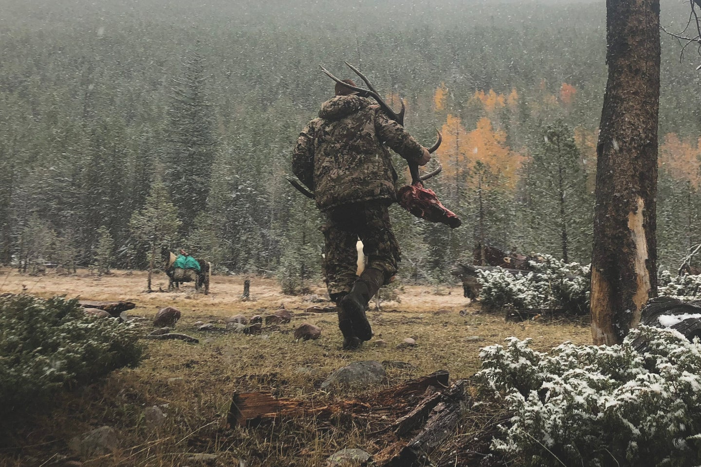 A mountain hunter carries a fresh bull elk skull into a snowy clearing.