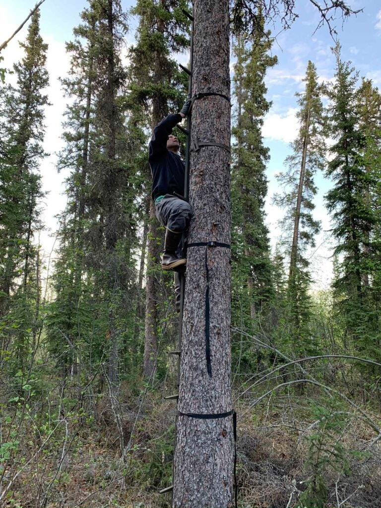 A hunter climbs into the treestand