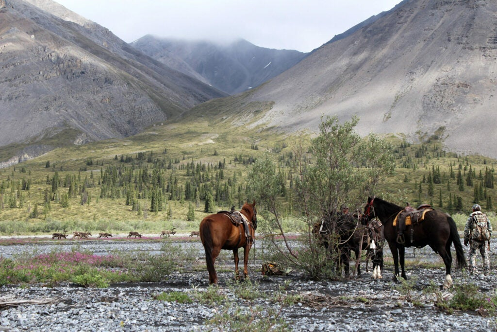 Two caribou hunters and their horses stand in the foreground of a big mountain valley in British Columbia.