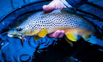 Winter Fly Fishing: How to Catch Trout on Streamers this Holiday Season