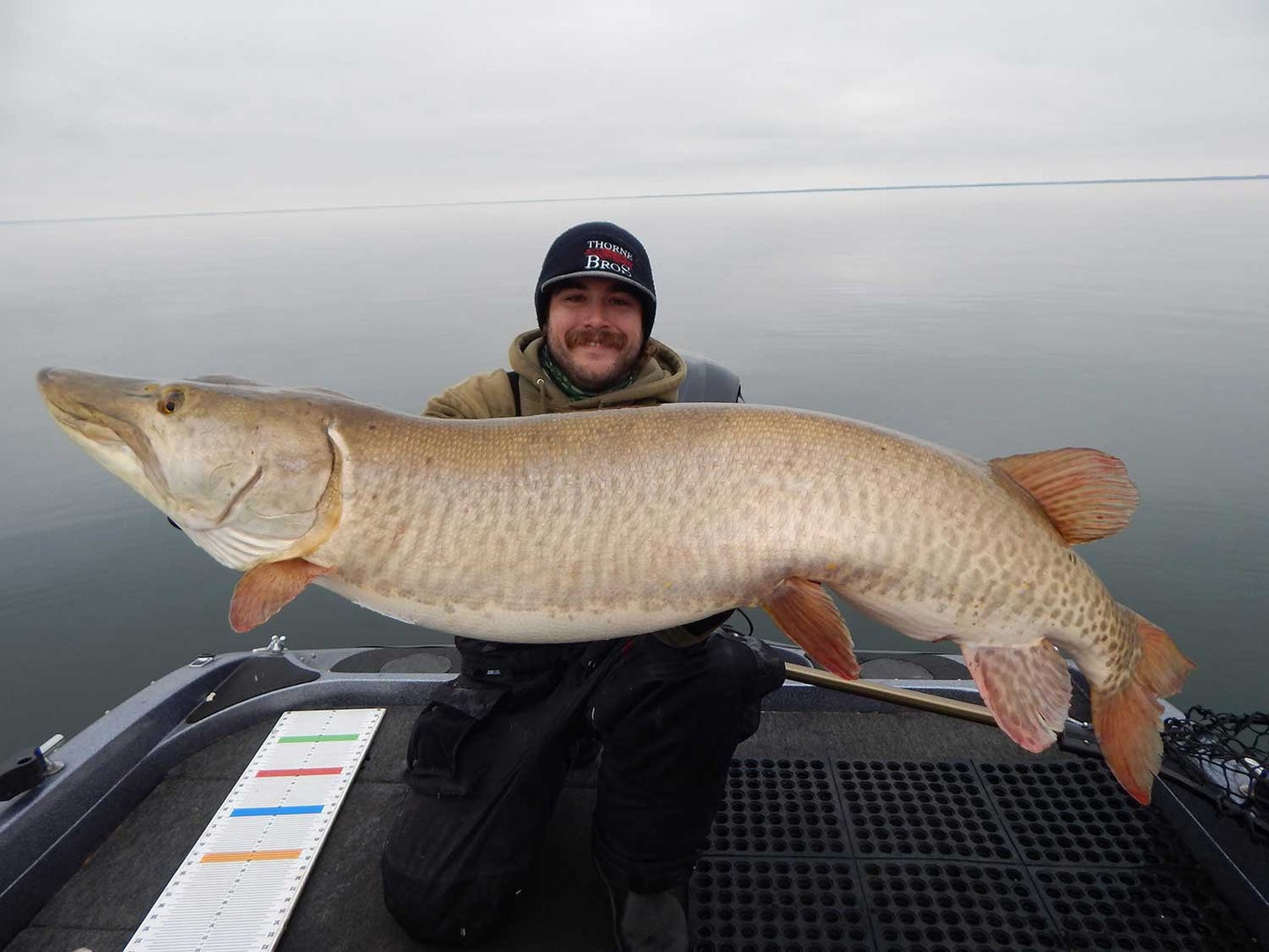 An angler holds up a large muskie fish.