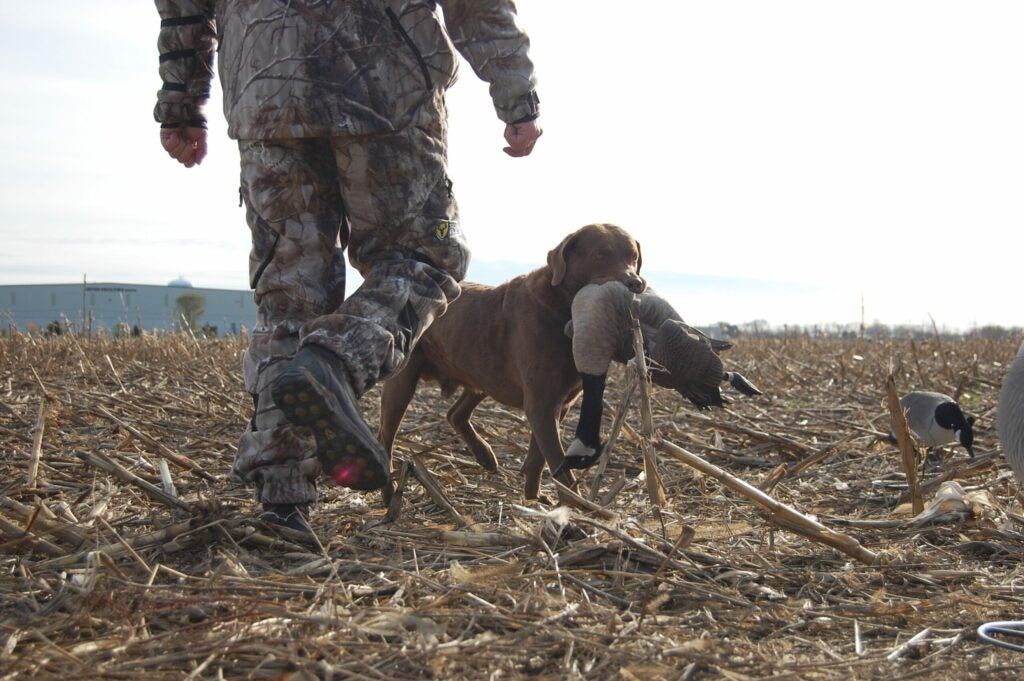 To kill big, late-season honkers, you need a diverse decoy spread.