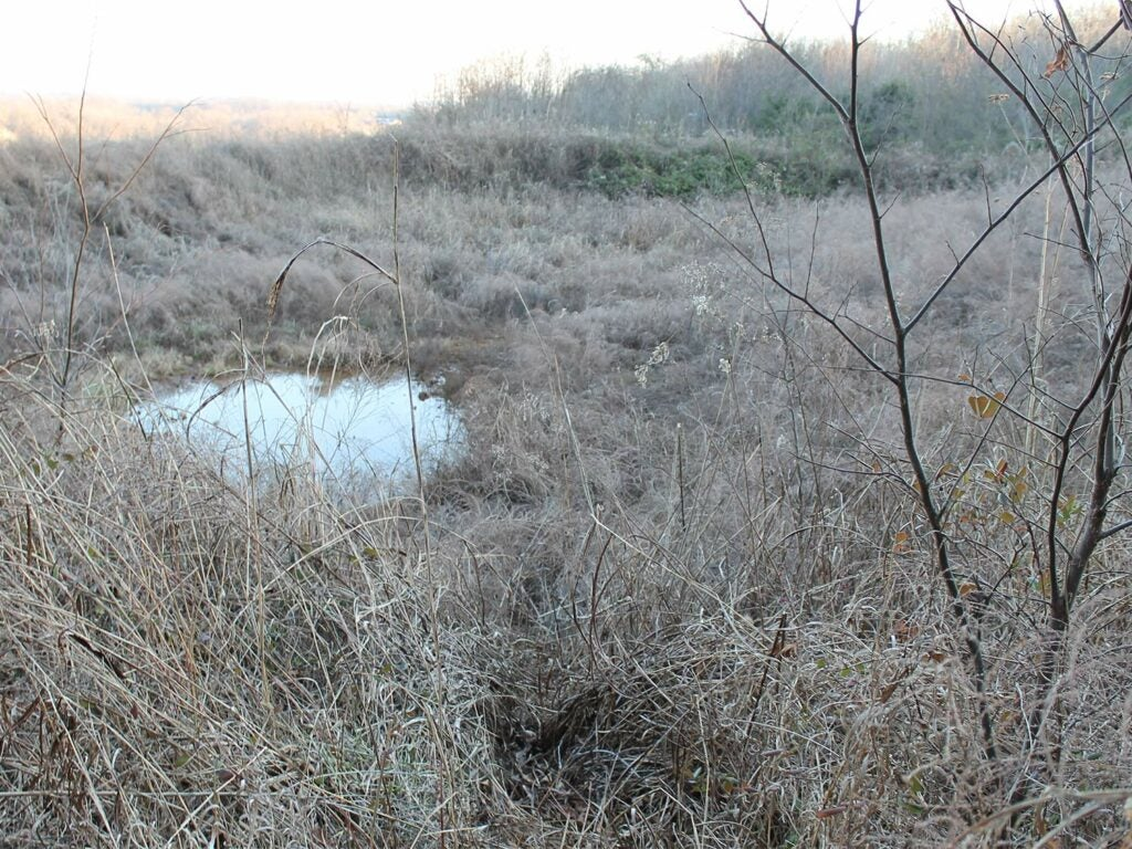 A small pond surrounded by dense brush.