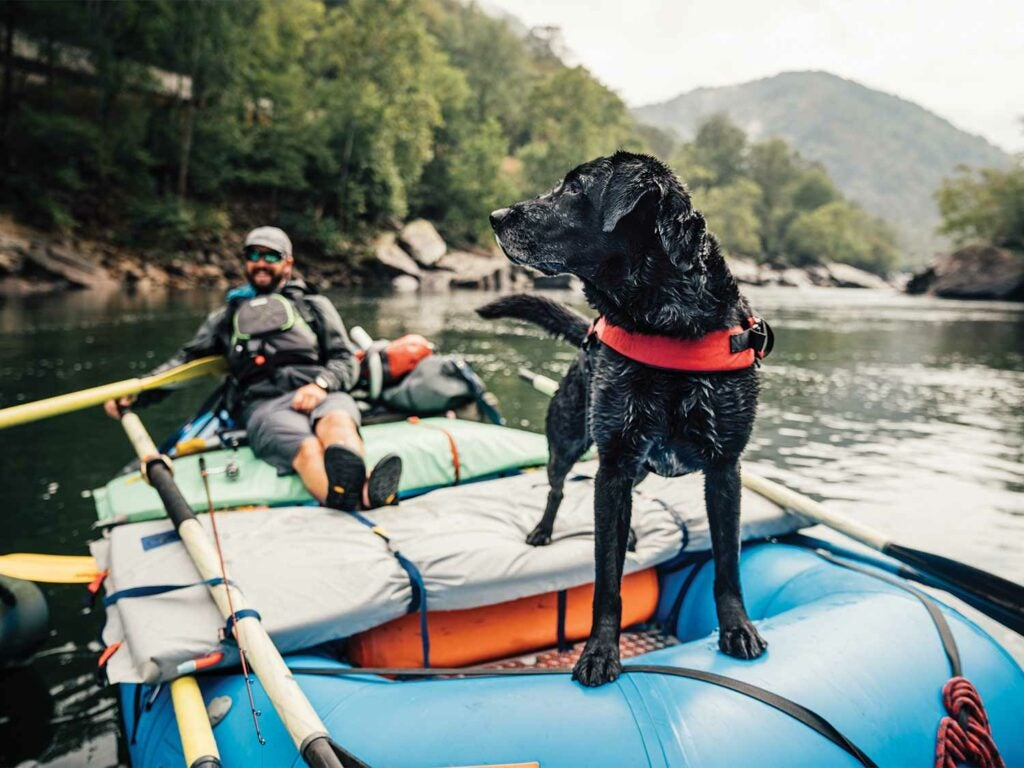 Angler and black lab on a fishing boat.