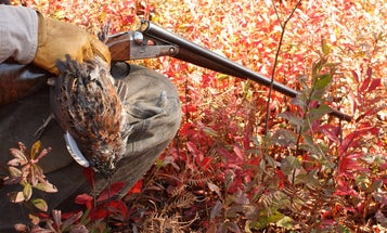 Why the Gauge of Your Shotgun Doesn't Matter on Upland Birds
