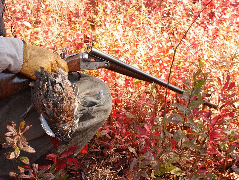 A hand holds a shotgun and a quail.
