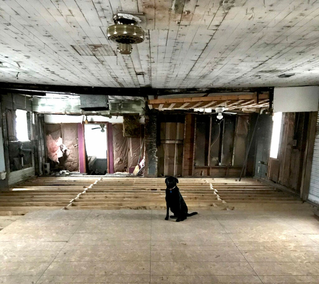 A black Lab in an old renovated duck hunting lodge.