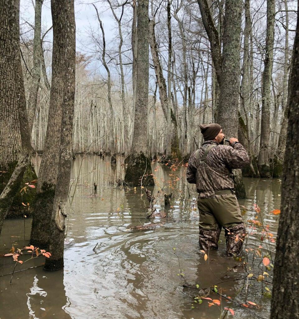 An Arkansas duck hunter in camo waders calls to mallards as he hunts timber.