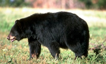 The Proposed Bear Hunting Ban in California Is a Threat to All Hunters