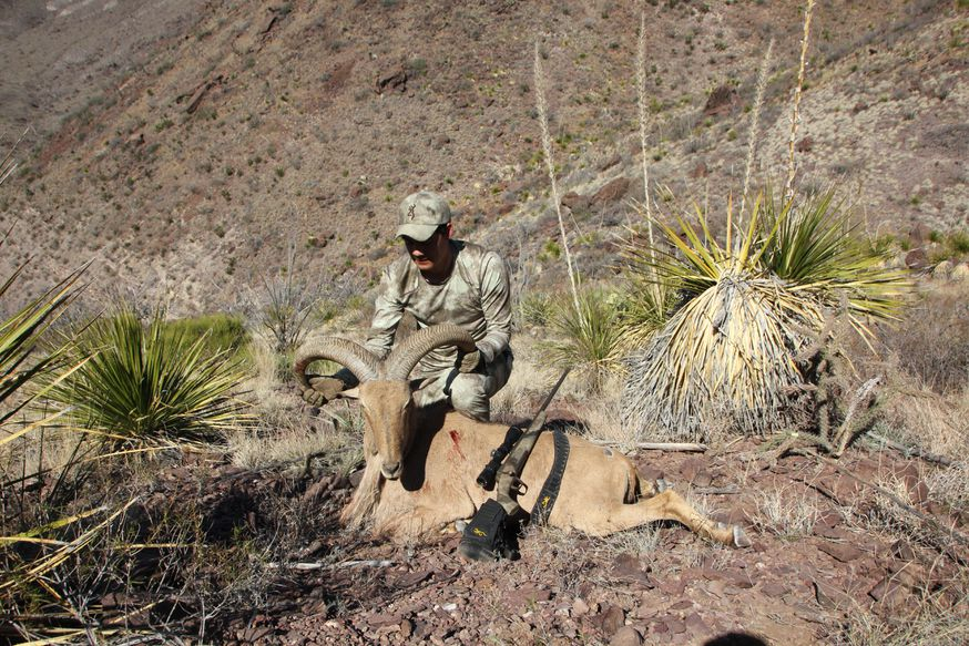 Aoudad hunting continues to grow in West Texas.