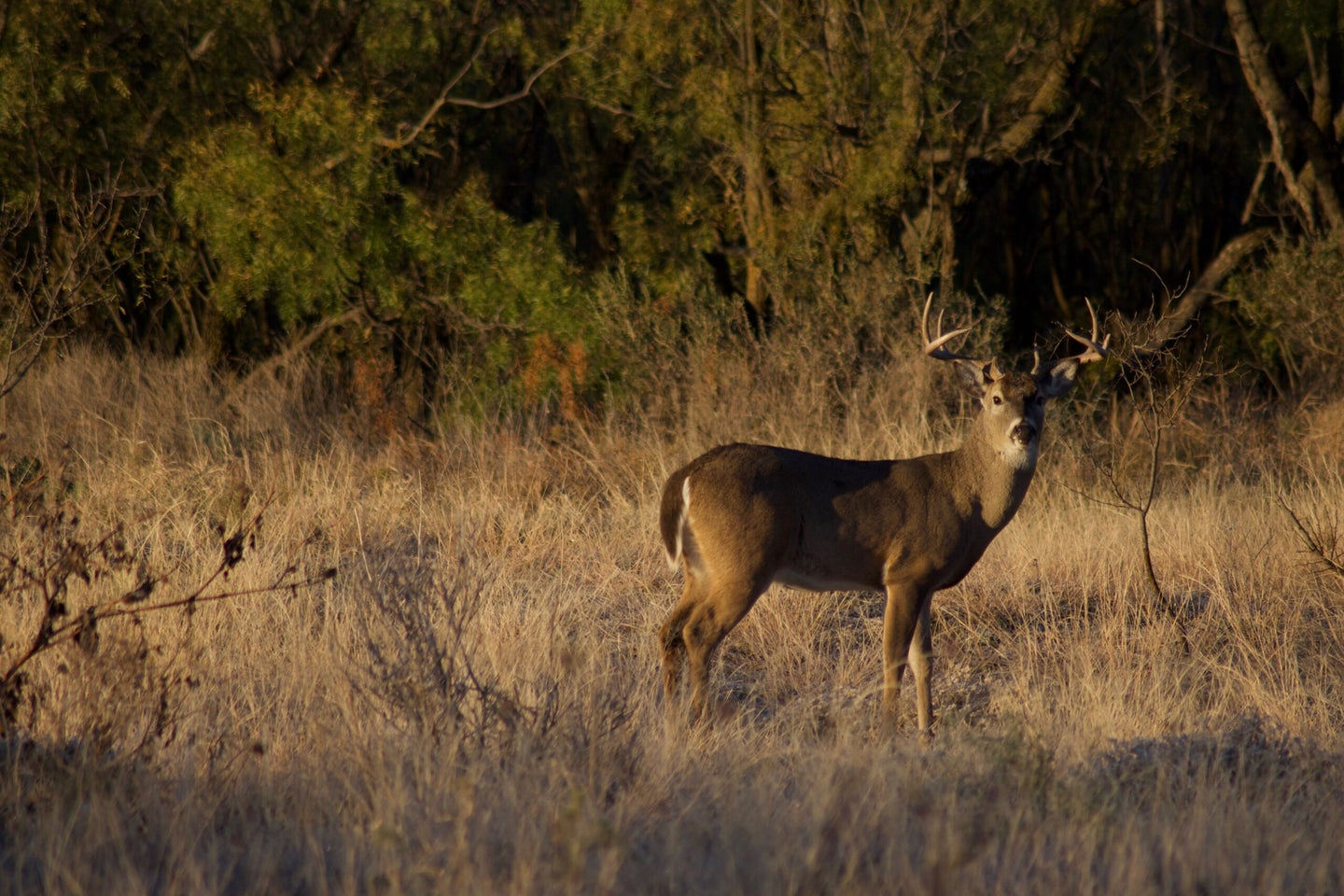 Texas has long been a top 10 B&C whitetail state.