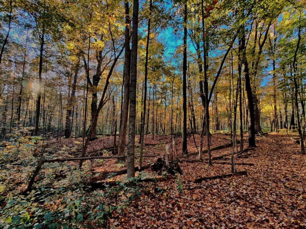 A pretty fall day in the squirrel woods.