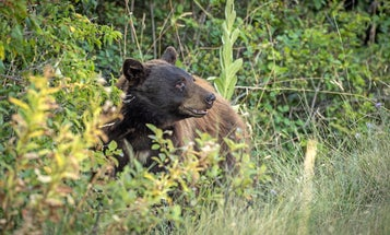 The Downfall of the California Bear Hunting Ban Proves That Hunters Can Make a Difference When We Stick Together