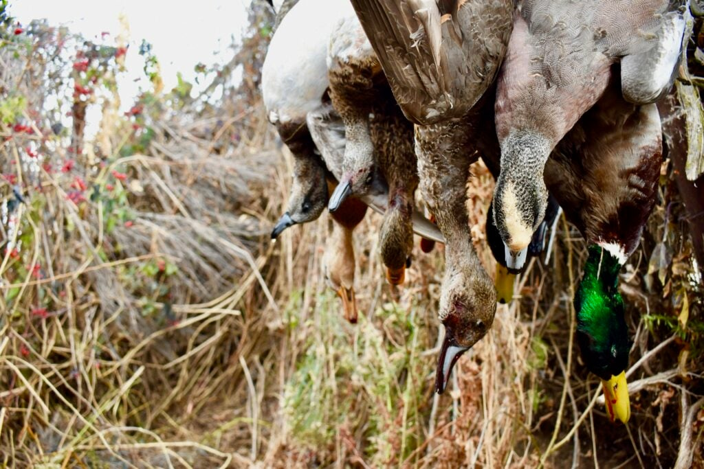 Fewer days afield is the answer to better duck hunts.