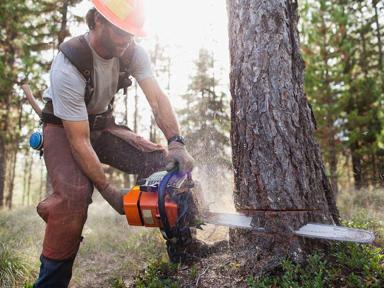 Man chopping down tree.
