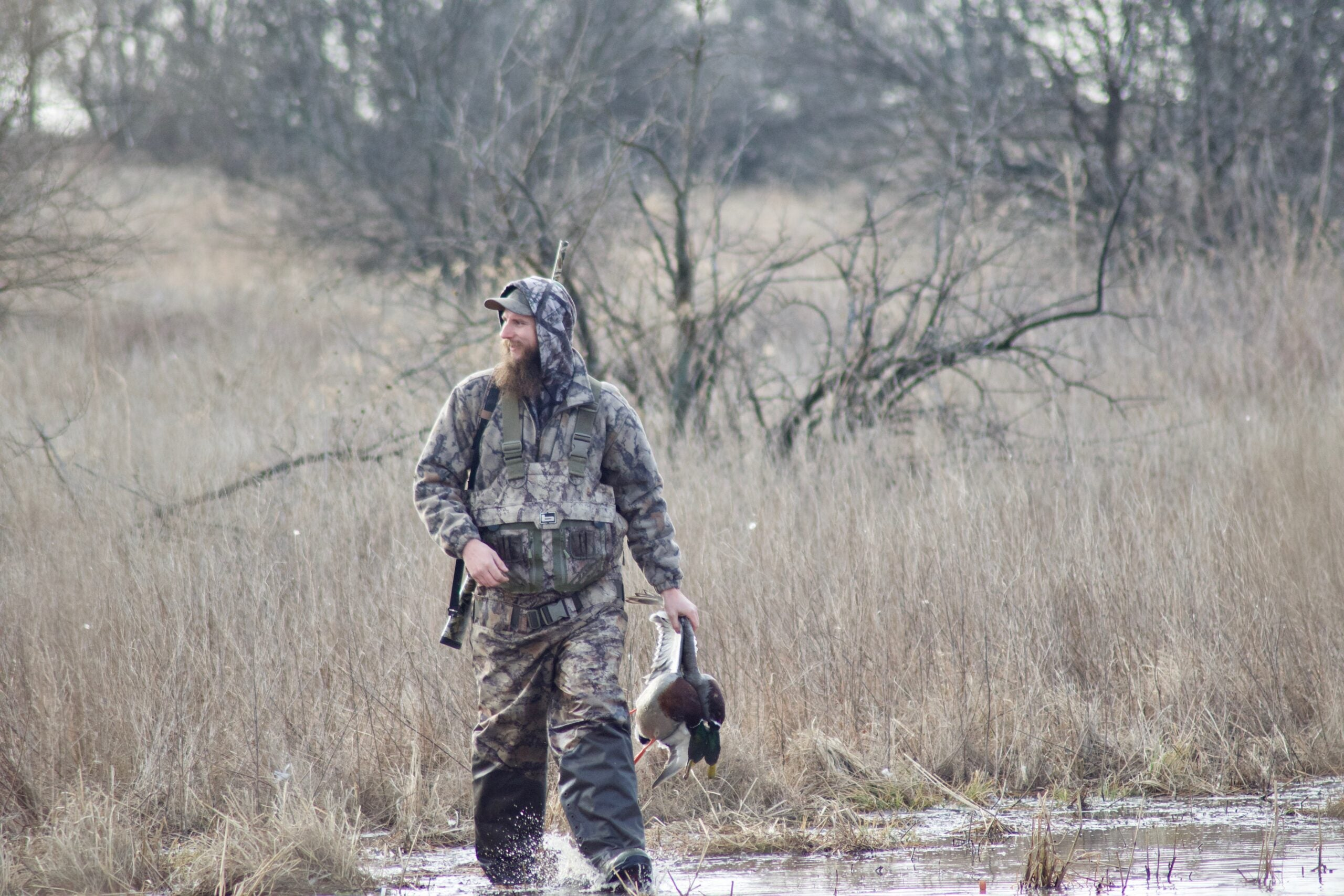 There's only one species of mallard no matter what continent you shoot one on.